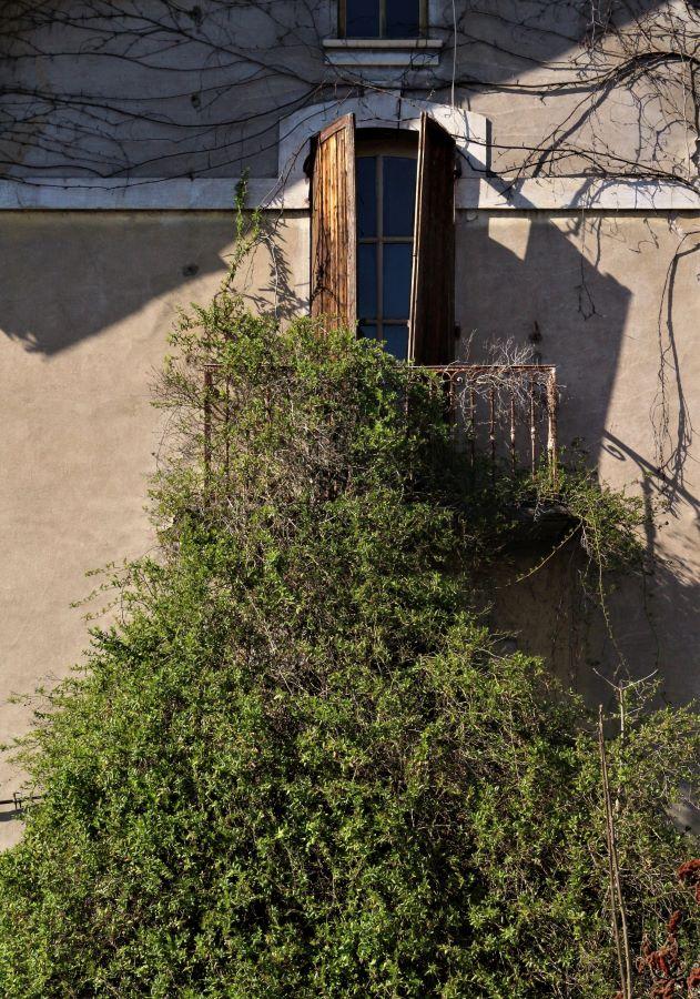 Photographie architecture végétale
